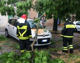 Un albero caduto sopra ad un'auto nella zona Porto di Fano