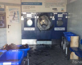 L'interno della lavanderia self-service Bianco & Nero di Fano