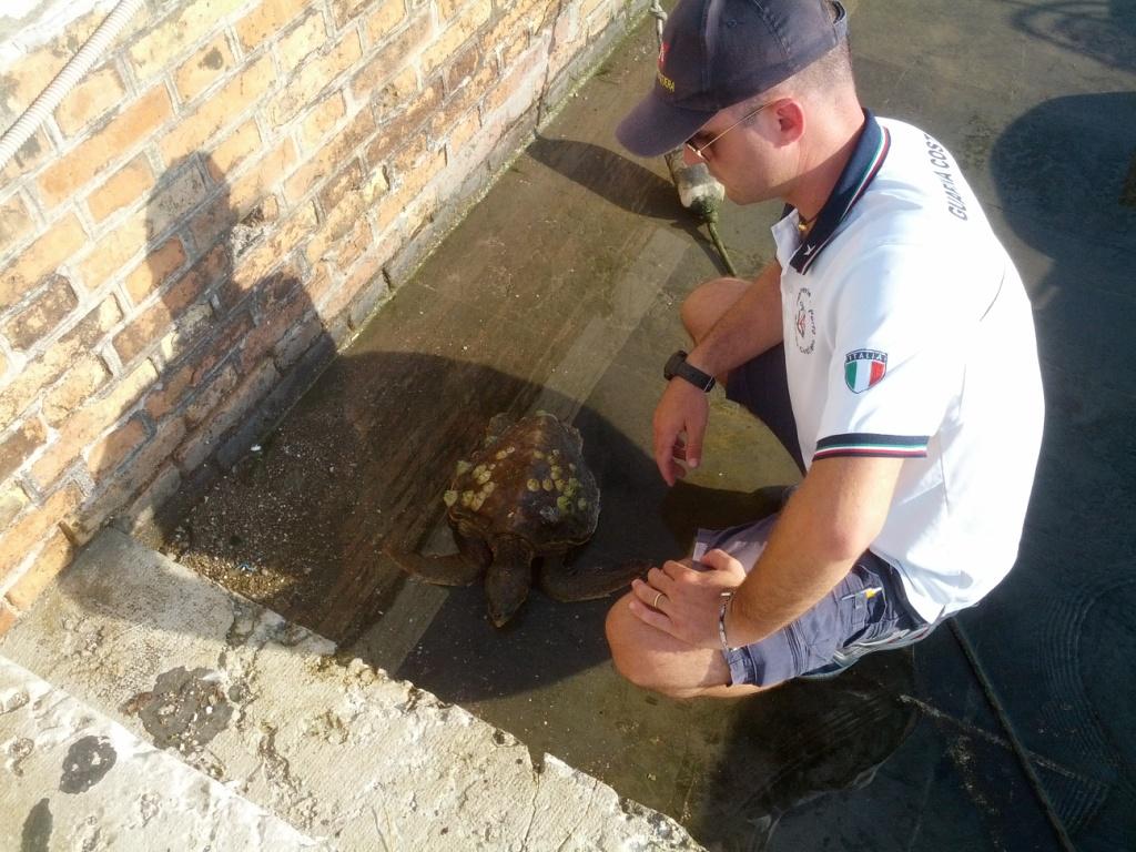 Lorenzo, la tartaruga marina recuperata dalla guardia costiera di Pesaro sotto La Croce del San Bartolo di Pesaro