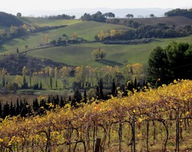 SanBartolo Vigne